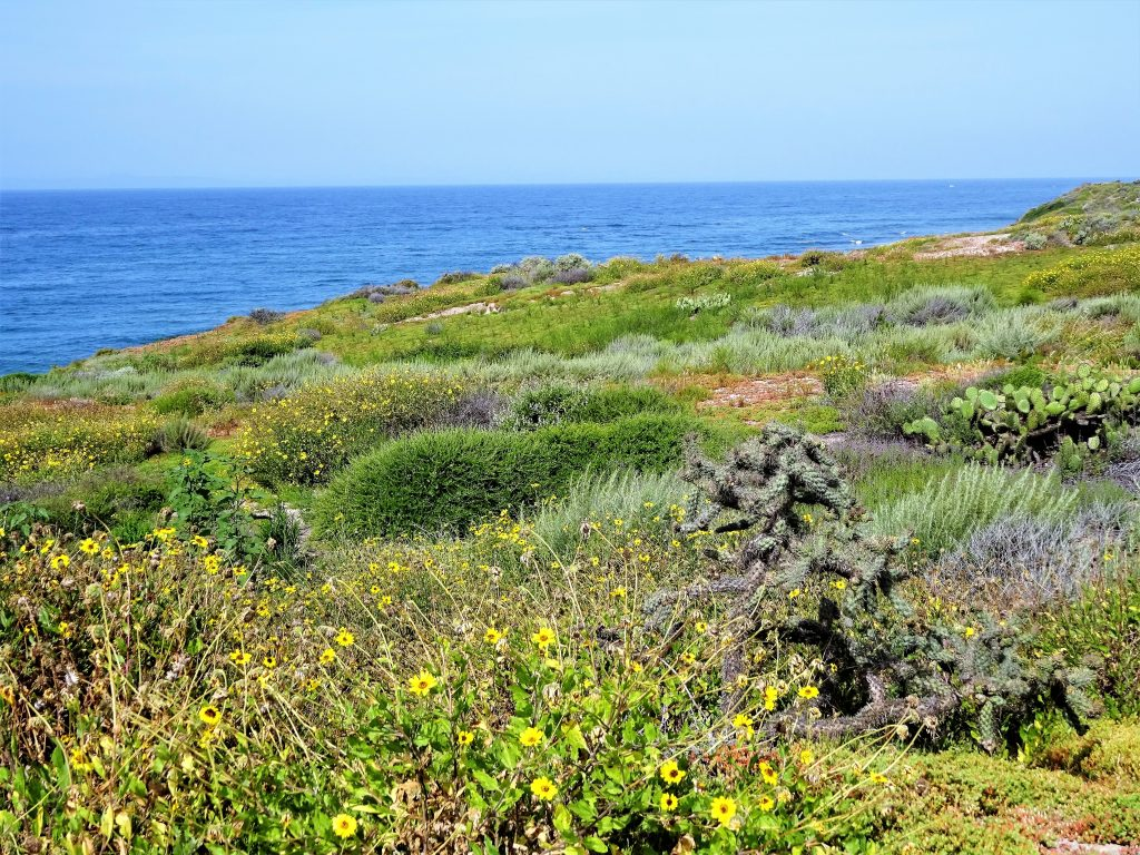 solo Travel : Seven Compelling Reasons Why You Need To Travel Alone - Blossoming Widow : Exploring Crystal Cove in Newport Beach, California