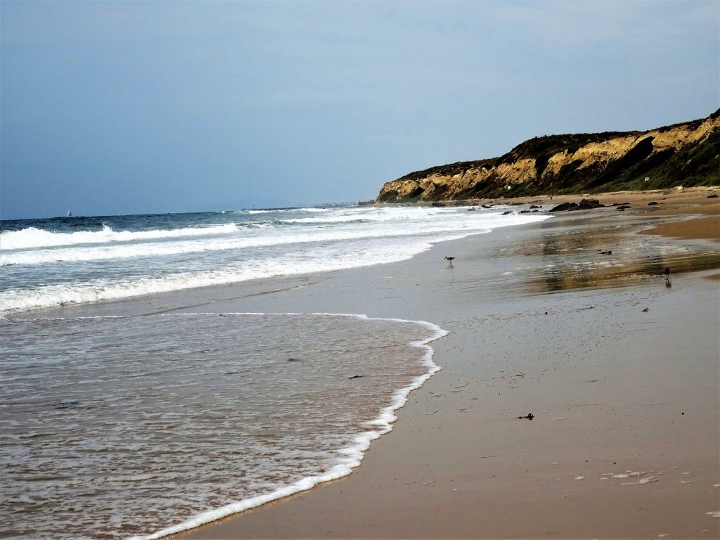 Solo Travel : Exploring Crystal Cove State Park - Blossoming Widow : Beautiful beach area with tide pools, natural seashore, vintage cottages and a great place to explore!
