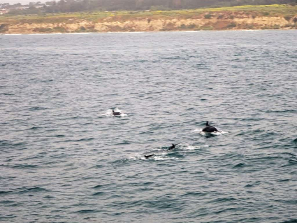Solo Travel : Whale Watching in Newport Beach, California : Adventure at sea in hopes of spotting some whales, dolphins and sea lions.