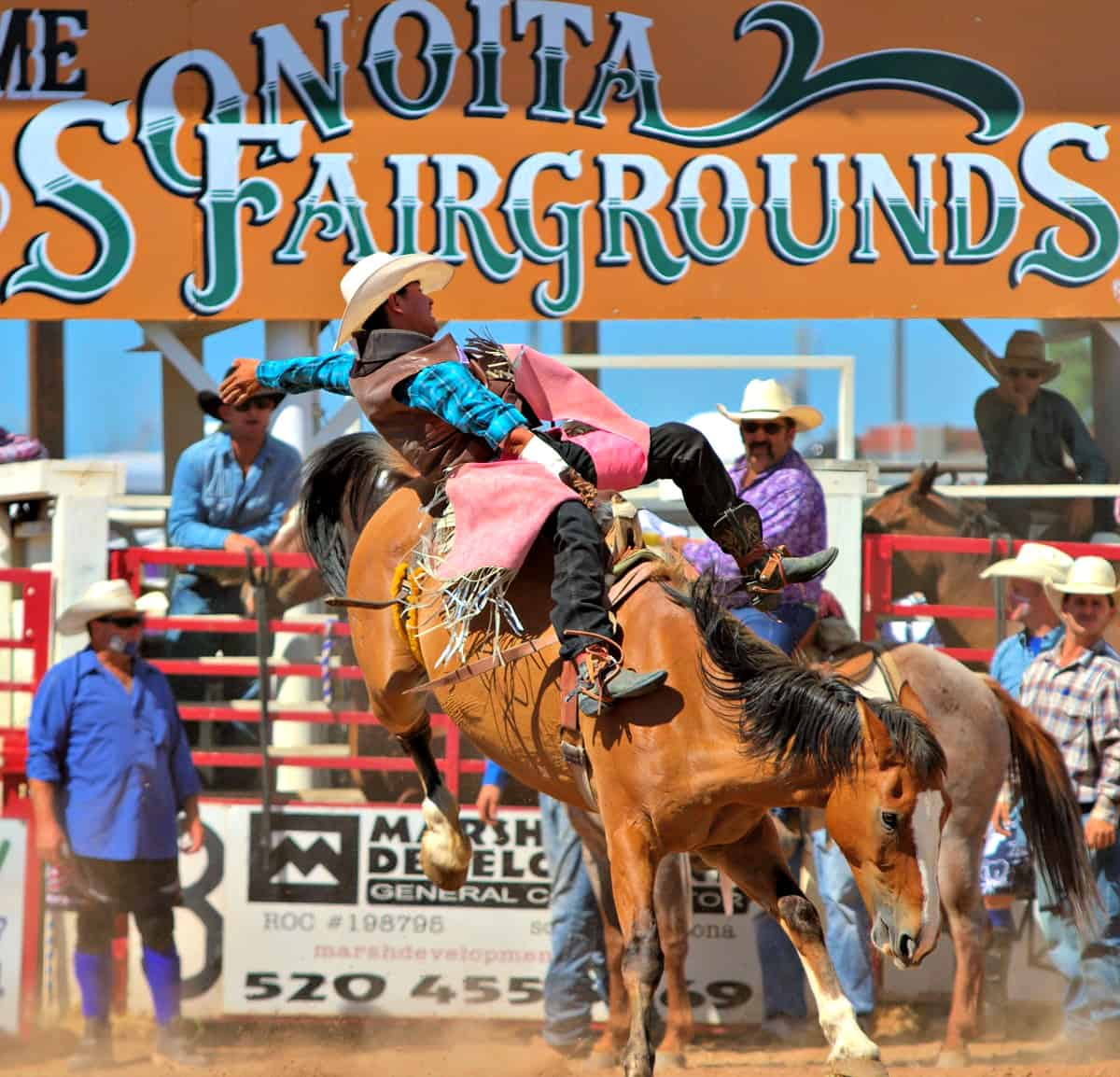 Cowboy on bucking horse at Sonoita Rodeo
