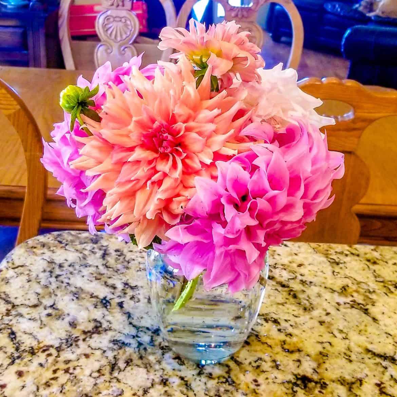 Orange and pink dahlias in a vase