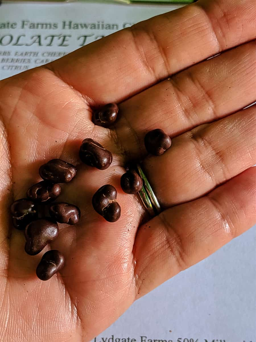 Chocolate pebbles in palm of hand