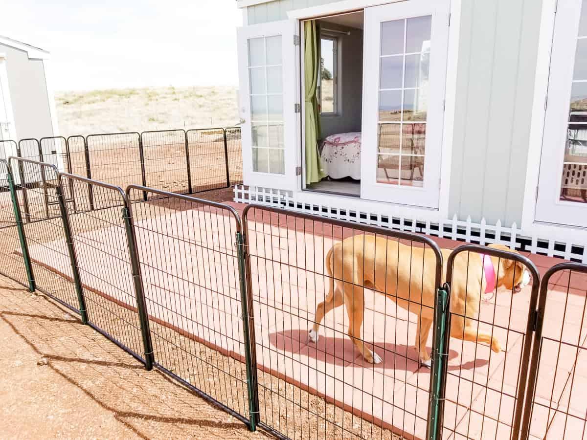 Dog fencing with big dog inside